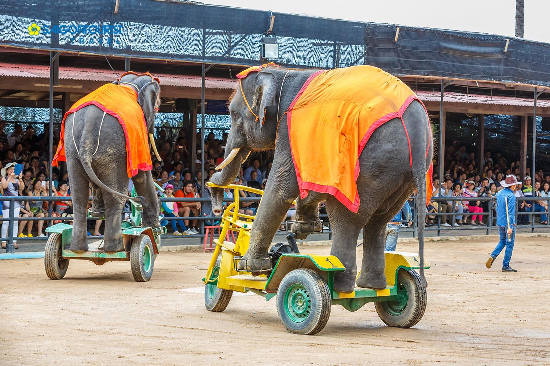 Kết quả hình ảnh cho làng voi thái lan